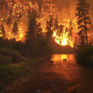 Desastres ambientales - incendios forestales