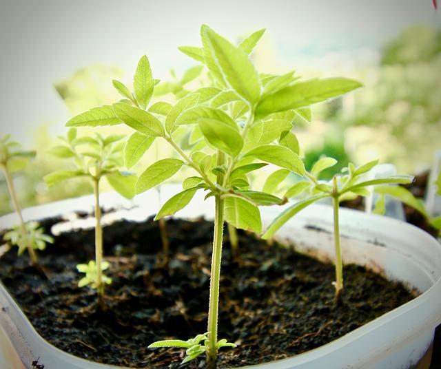 esqueje reproducción de plantas